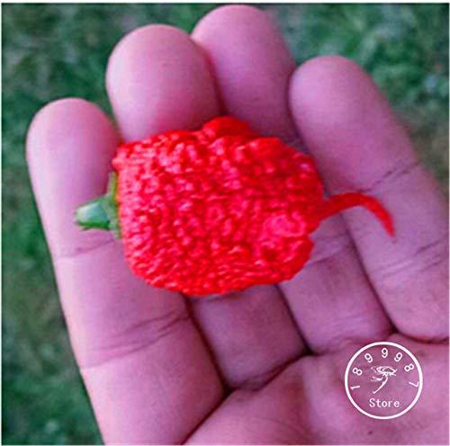 Pinkdose Großer Verkauf!100 Teile/beutel 16 Arten zu wählen Hot Chili Pepper capsicum Gemüse Bonsai, Happy Farm, 5M6DUT: CAROLINA REAPER