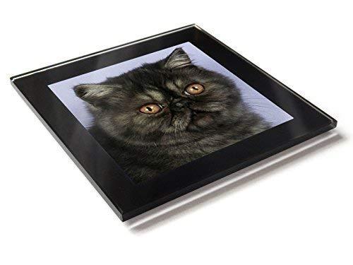 Exotisch Schwarzer Rauch Katze Kätzchen Premium Glastisch Untersetzer mit Geschenkverpackung