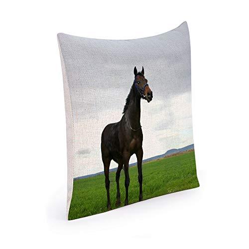 Black Horse Kissen (Muccum Pretty-Black-Horse Thema Design Kissen Dekoration Baumwolle und Leinen Kissenbezug Platz Benutzerdefinierte Kissenbezug Kissenbezug Sofa Lesen Rest Kissenbezug 18 x 18 Zoll)