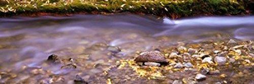 ramic Images - Cimarron Creek New Mexico Photo Print (91,44 x 30,48 cm) ()