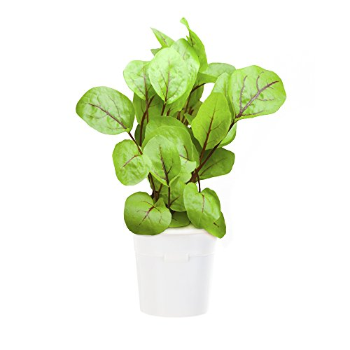 Click & Grow Lot de 3 recharges Smart Herb Garden pour oseille sanguine