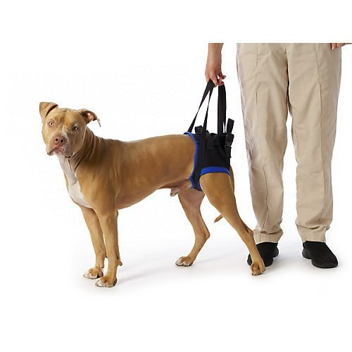 walkabout-back-pet-harness-med-large-by-walkabout-harnesses