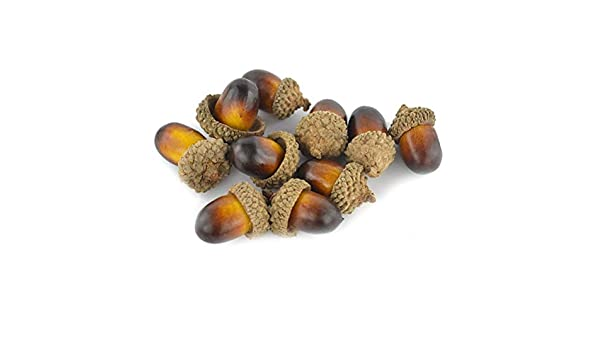 20pcs Natural Dried Flowers Acorns Table Home Accents Party Decor Ornaments