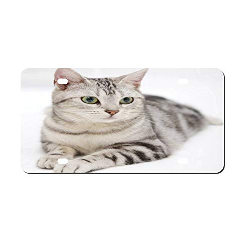 DKISEE Lovely Cat Metal Front License Plate Tag Auto Car Tag Vehicle Tag 4 12x6 inches