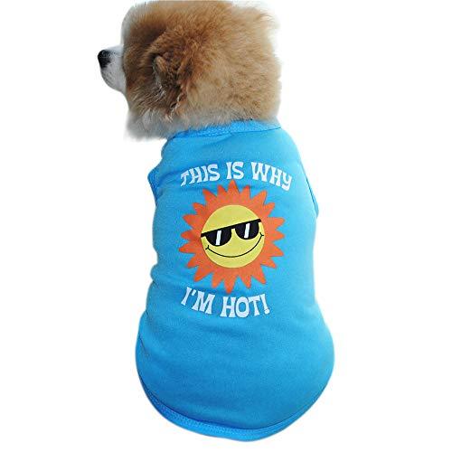Smniao Haustier Hund Kleidung This is Why I'm Hot Shirt Gedruckt Hund Rock Weste Kostüme Kleiden für Teddy Welpen Katze T-Shirt(Blau. XS)