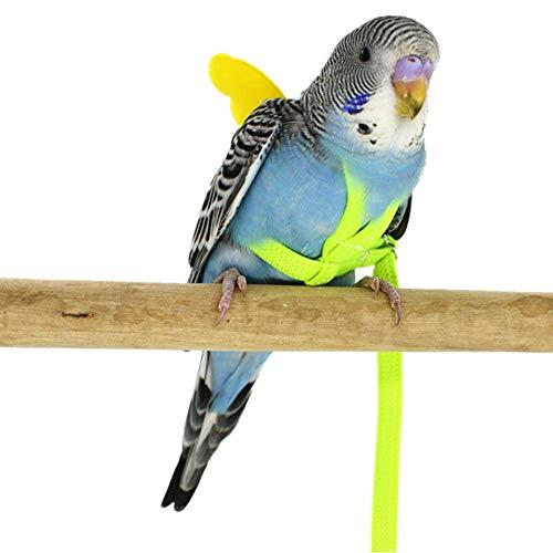 Pettorina Regolabile per pappagalli, e Pappagallo per Animali Domestici, Corda per trazione, addestramento per Piccoli Uccelli ...
