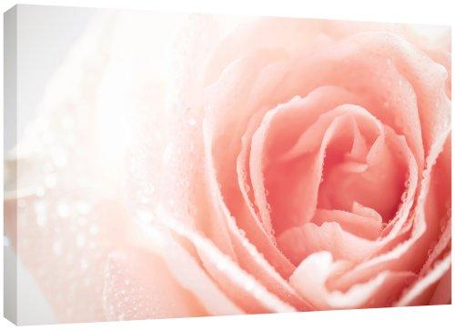 mool-tela-con-rosa-su-telaio-in-legno-vernice-impermeabilizzante-pronta-da-appendere-81-x-56-cm