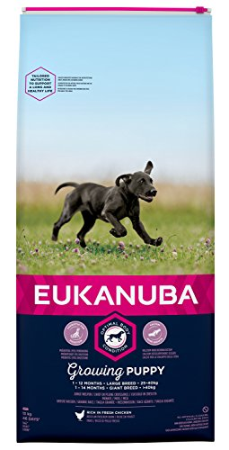 Eukanuba Puppy Trockenfutter für große Rassen - Qualitatives Welpen Futter mit verbesserter, neuer Rezeptur für Hunde im Alter von 1-14 Monaten in der Geschmacksrichtung Huhn - 1 x 15kg Beutel