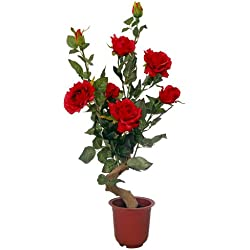 Rosenpflanze 60 cm rot Kunstpflanze
