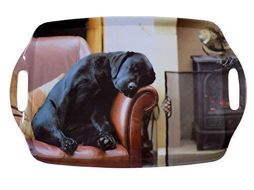 dormant Labrador chiot noir marron grand mélamine transport TRAY 48 x 31cm