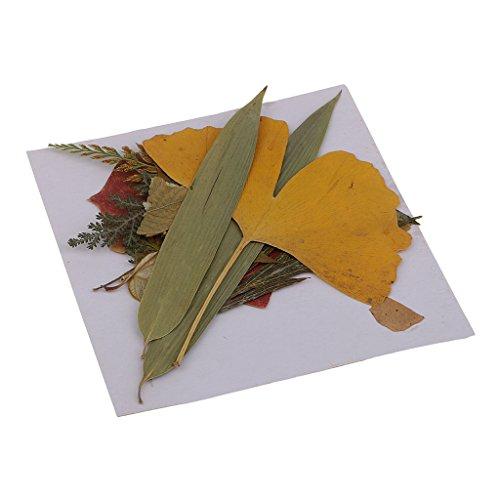 MagiDeal 16 Stück Echte Gepresste Getrocknete Blumen Blätter Für DIY Scrapbooking Handwerk (Gepresstes Blatt)