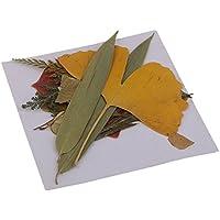 MagiDeal 16 Stück Echte Gepresste Getrocknete Blumen Blätter Für DIY Scrapbooking Handwerk
