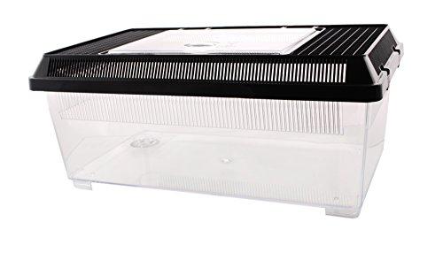Plastikterrarium Flat Box Größe I