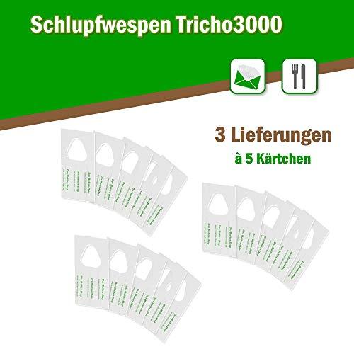 Der Motten-Shop Schlupfwespen gegen Lebensmittelmotten 5 Kärtchen je 3000 Stück x 3 Lieferungen