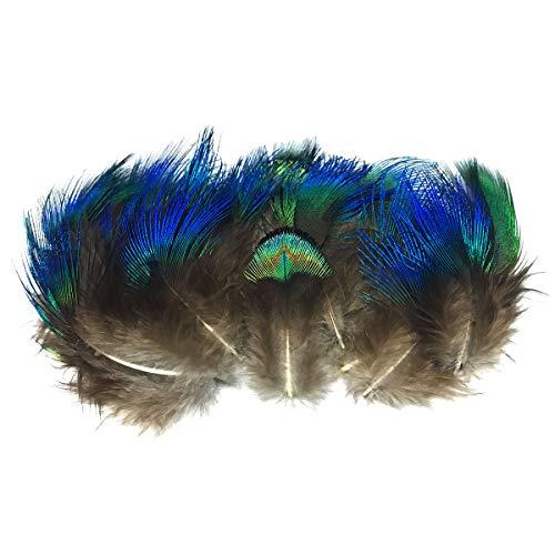Anladia Pfauenfedern blaufedern DIY Basteln Federn 4-8 cm für Fasching, Karneval, Halloween, Basteln, Bekleidung, ()