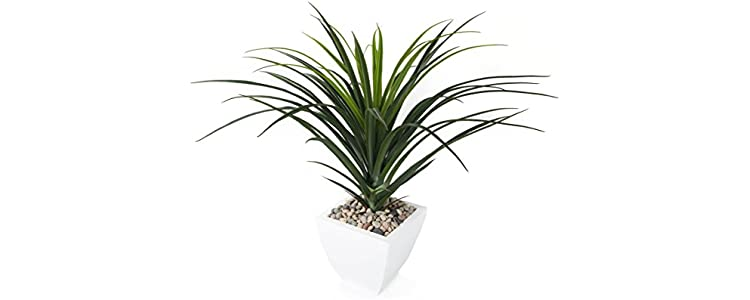 Plantas de interior jard n bons is flores - Plantas de interior altas ...