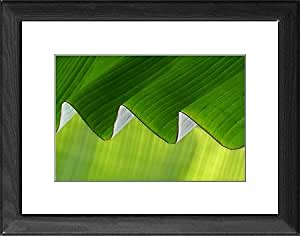 Striée Affiche encadrée Motif feuille de bananier