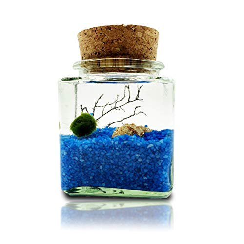 Nano Marimo Moss Kugeln Glas Aquarium Set - Zierpflanze für Aquarien - Aegagrophila linnaei - Wasserpflanze Geschenk Set