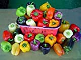 GEOPONICS Grand Bell Mix Pepper Seeds - Beautiful Colors See Our Store!