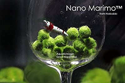 Luffy Nano Marimo Ball x 5 pcs - Live Aquarium Aquatic Plant for Fish Tank