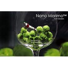 Luffy Nano Marimo - Bolas de musgo, 6 unidades Planta acuática viva para acuario, apta para acuarios de peces y gambas con difusor de CO2, helechos y anubias