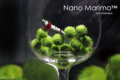 luffy-nano-marimo-ball-x-5-pcs-live-aquarium-aquatic-plant-for-fish-tank