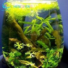 Promotion! 200seeds 12 Kinds Mixed Seeds Aquarium Fish Tank herbe Indoor Water Watch Belle aquatique Plantes à graines