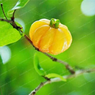 Pinkdose Surinam Kirsche Bonsai Pitanga Frucht Bonsai Brasilianische Kirsche Red Seltene Pflanzen für Haus Garten Bio-Früchte Bonsai 10Pcs: 1 -
