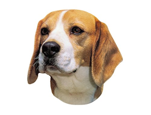 nobby-adhesivo-beagle