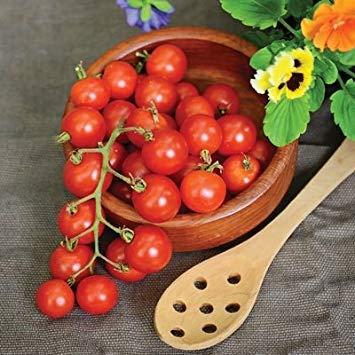 PLAT FIRM 10 Samen von Tomate Lizzano