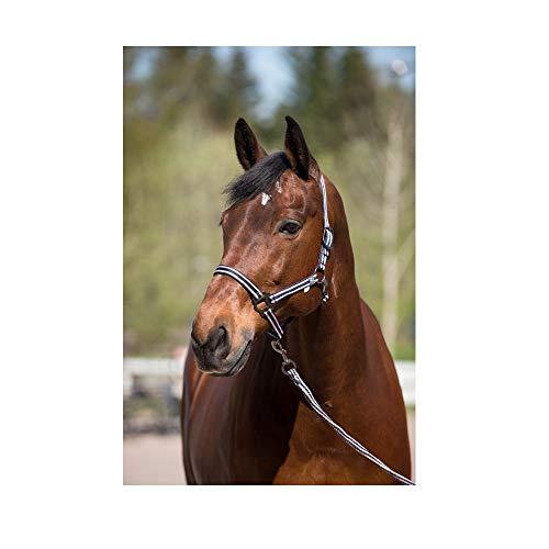 netproshop Pferde Nylonhalfter mit Passendem Führstrick 2 m Gemustert (1 Set) Auswahl, Groesse:XL FULL, Farbe:dunkelblau