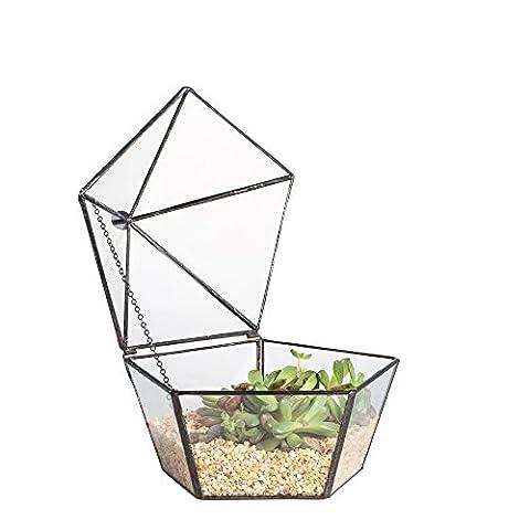 Artistique moderne en verre transparent jewel-boxed Pentagone Forme géométrique Plante pour terrarium en verre Jardinière Succulente Mousse Fougère avec couvercle basculant