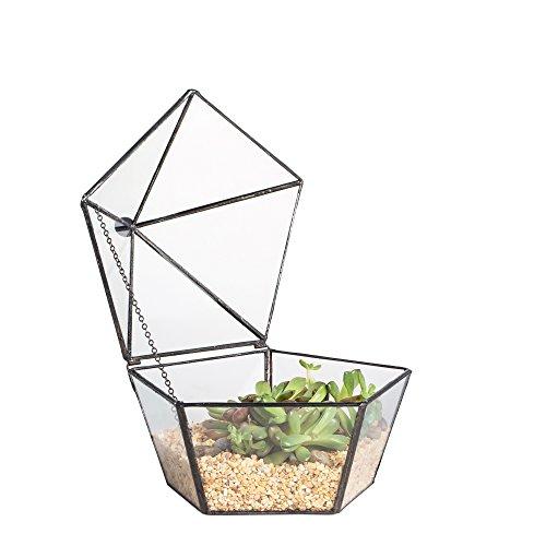 Terrarium moderne et transparent de forme pentagonale - Géométrie - Milieu de table pour table basse - Décoration de mariage - Pot de fleur
