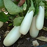 SeeKay Aubergine Snowy - 20 seeds - Vegetable