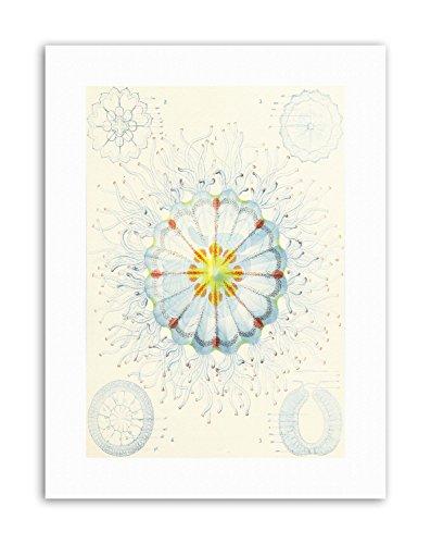 Wee Blue Coo Medusae Ernst Haeckel Science B Poster Nature Canvas Art Prints