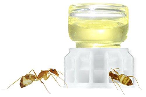 byFormica Ameisenshop Ameisentränke Micro