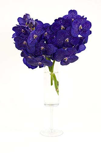 Gelukkig Bloemen Elegante Glasvase auf hohem Fuß Orchideenvase H 31 cm Ø 9.5 cm