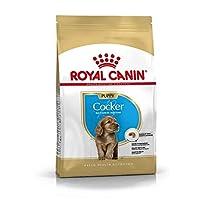 Royal Canin Breed Health Nutrition Cocker Junior 3 KG