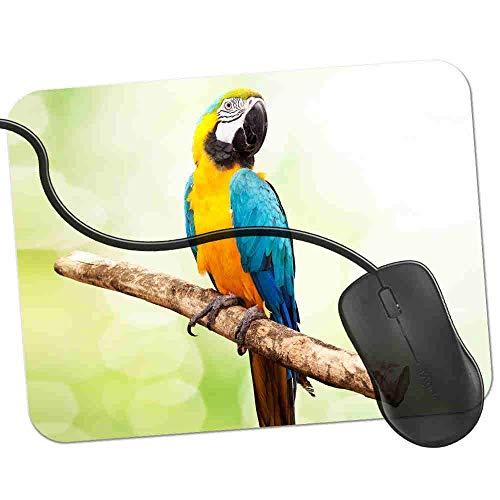Gaming Mauspad Multi Farb-Macaw-Papagei Sat On Branch Fransenfreie Ränder spezielle Oberfläche verbessert Geschwindigkeit und Präzision rutschfest 2K173 - 20 Farb-tv