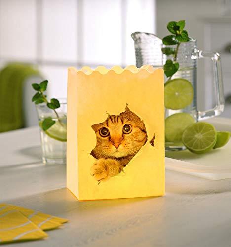 Silex Windlicht Katze