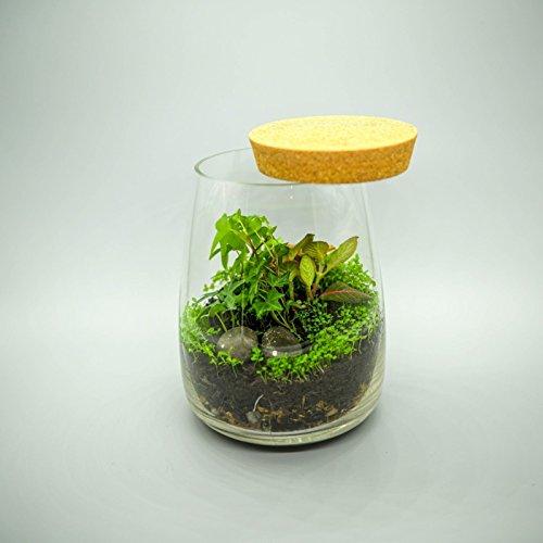 Terrario kit con contenitore in vetro, mini giardino, idea regalo, kit fai da te