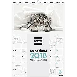 Finocam Imágenes - Calendario de pared 2018, espiral, diseño gatitos, español, 300 x 430 mm, 150 g/m²