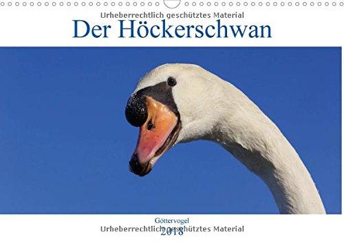 Der Höckerschwan - Göttervogel (Wandkalender 2018 DIN A3 quer): Bereits im antiken Griechenland und im alten Rom wurden Höckerschwäne gehalten und als Seelenvögel verehrt. (Monatskalender, 14 Seiten )