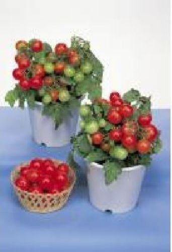 just-seed-vegetable-tomato-red-robin-8-seeds-economy-pack