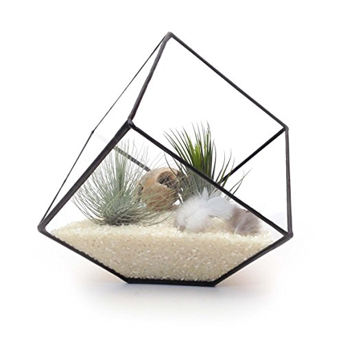 cube-large-geometric-glass-terrarium-modern-planter-indoor-gardening-handmade