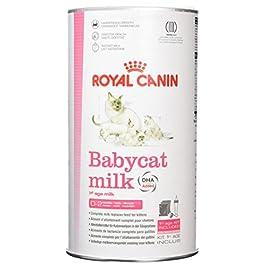 Royal Canin Babycat Milk – 1st Age Milk 0,3 kg
