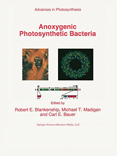 Anoxygenic Photosynthetic Bacteria (Advances in Photosynthesis and Respiration)