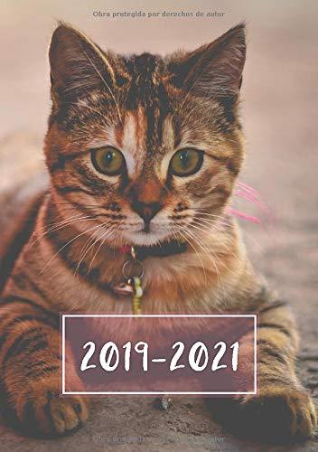 2019 - 2021: Comienza con semana 27   Julio 2019 - Junio 2021   Vista Semanal   1 Semana en 1 Página   24 Meses Calendario Planificador   A5 Planner   Gatito