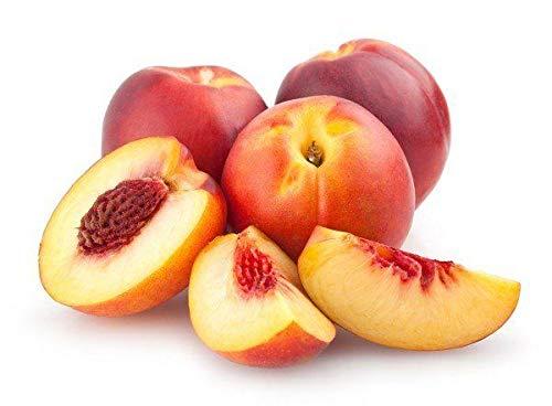 Portal Cool ?? Nektarine Pfirsich ?? Tree - 3-Finest Seeds ?? '' Prunus Persica''Uk Verkäufer ??