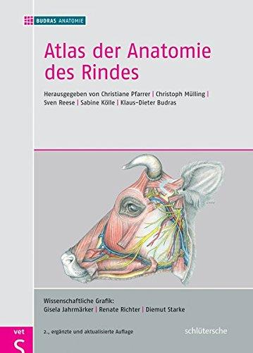 Atlas der Anatomie des Rindes: Inklusive Supplement